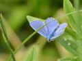 德国之夏昆虫鲜花摄影