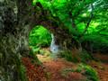 森林植物景色待机壁纸