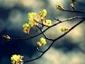 唯美植物图片-唯美植物壁纸图片大全