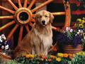 可爱狗狗图片-可爱狗狗图片壁纸大全