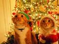 圣诞装扮可爱小猫壁纸图片大全