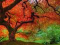 迷离的秋叶图片-迷离的秋叶图片大全