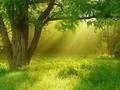 丛林里的阳光桌面壁纸