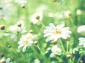 盛夏小清新植物桌面壁纸