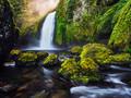 原始森林图片-原始森林图片免费下载