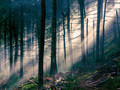森林美景桌面图集
