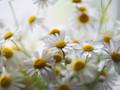 美丽花朵朦胧微距摄影壁纸