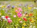 野花图片-高清野花图片壁纸大全