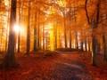 森林景色唯美壁纸