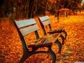 落叶自然景色风景壁纸
