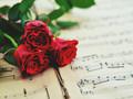 唯美花卉锁屏壁纸桌面