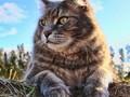 可爱小猫iPad壁纸