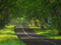 唯美林间小路桌面壁纸