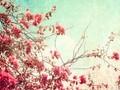 古着花色暗淡之美壁纸图片