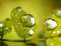 小清新绿色植物护眼iPad壁纸