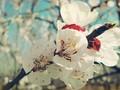 春暖花开桌面壁纸