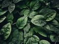 绿色植物的叶子护眼背景图片壁纸