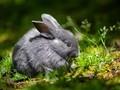 软萌可爱的小兔子图片壁纸2