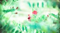 春暖花开小清新桌面壁纸