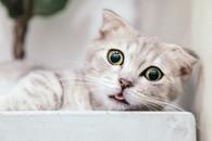 高清萌宠小猫咪图片壁纸3