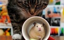 可爱的小老鼠图片壁纸