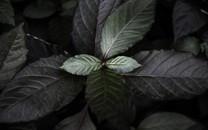 非常养眼的绿色植物背景高清图片壁纸