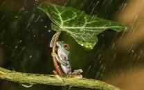 雨中唯美植物图片-雨中唯美植物图片大全