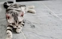 可爱小猫咪图片壁纸
