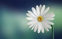 微距下小清新唯美花朵特写高清图片
