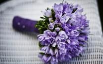 柔美高清的花儿图片壁纸2