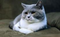 可爱猫图片大全超萌2
