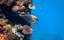 奇幻的海底生物图片壁纸
