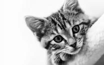 可爱猫图片大全超萌3