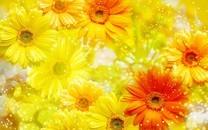 菊花壁纸图片-菊花图片大全