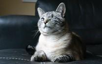 可爱猫图片大全超萌4