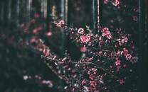 清新小植物图片图片壁纸