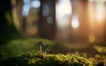 可爱蘑菇素材图片大全3