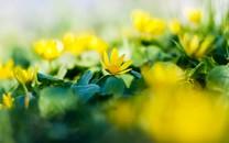 清新的花朵唯美壁纸