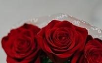 高清玫瑰花桌面图片壁纸