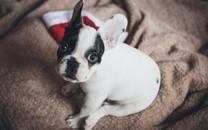 可爱小狗高清摄影电脑桌面壁纸图片