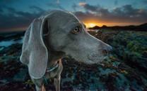 可爱小狗高清摄影电脑桌面壁纸图片2