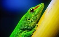 色彩鲜艳的各种动物图片壁纸2