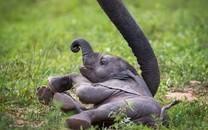 小清新动物可爱小象图片壁纸