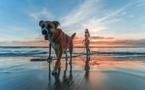 狗最好的陪伴图片壁纸
