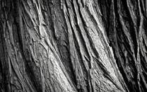 木质背景图片大全壁纸