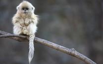 可爱猴子高清图片壁纸