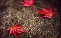 绿色植物叶子桌面壁纸