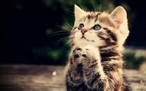 可爱的猫咪图片手机壁纸2