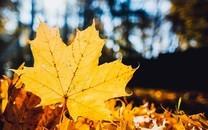 一片叶子唯美意境图片壁纸