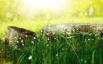 草地上的清新小花图片壁纸